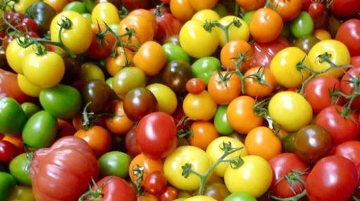 Nos tomates