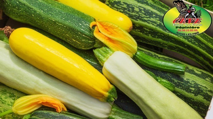 Nos courgettes