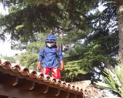 CEVE Pépinière - Nans-les-Pins - nids de frelons